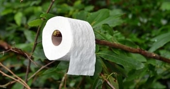 Toilet roll on branch