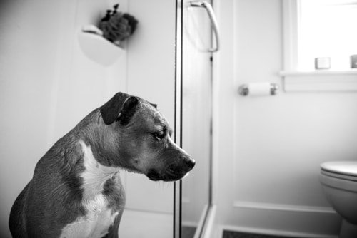 Get rid of unpleasant pet smells in the bathroom