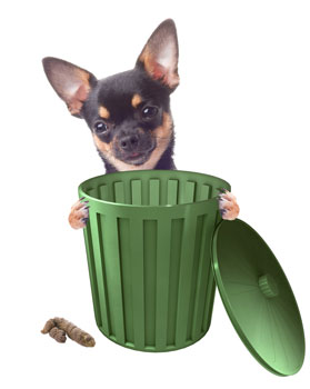 cute dog with poop and trash can